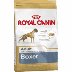 BOXER_ADULT